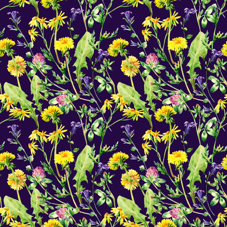 field flowers: Watercolor wild field flowers. Meadow watercolor wild flowers seamless pattern. Watercolor wild bellflowers, dandelion, daisy, weeds and herbs background. Hand painted natural illustration Stock Photo