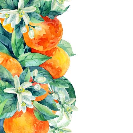 Watercolor mandarine orange fruit card with leaves and blossom  on white background. Orange citrus tree. Mandarin bloom. Tangerine with leaves, branch, flower. Hand painted illustration