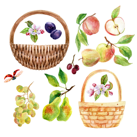 Watercolor fruit, berry and wicker basket set. Apple, pear, peach, grape branch with leaves. Watercolor apple, pear, peach, grape, plum isolated on white background. Fruit set. Hand drawn illustration Banco de Imagens