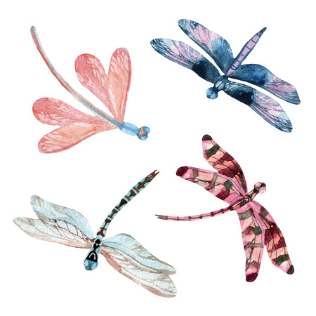 Watercolor dragonfly set isolated on white background. Hand painted illustration Stock Photo