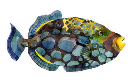 applicable: Watercolor clown triggerfish. Hand painted illustration of tropical fish Stock Photo