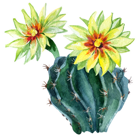 Watercolor cactus isolated on white background. Hand painted illustration