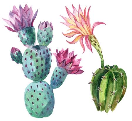 Acuarela conjunto de cactus aisladas sobre fondo blanco. Ilustración pintada a mano Foto de archivo - 73866270