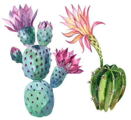 Watercolor cactus set isolated on white background. Hand painted illustration Banco de Imagens