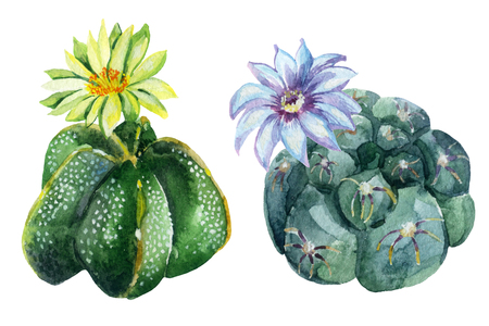 Acuarela conjunto de cactus aisladas sobre fondo blanco. Ilustración pintada a mano Foto de archivo - 73780916