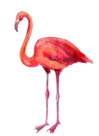Watercolor illustration of pink flamingo