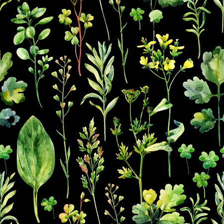 plantain herb: Watercolor meadow weeds and herbs seamless pattern. Watercolor wild field herbs on dark background. Hand painted illustration Stock Photo