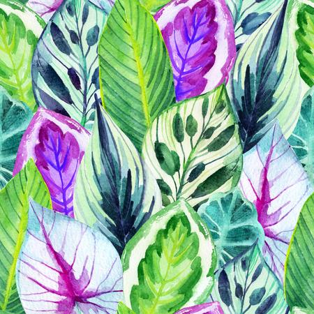 Patrón inconsútil de las hojas inusuales. Dibujado a mano exótica hojas ilustración en acuarela. Foto de archivo - 76827402