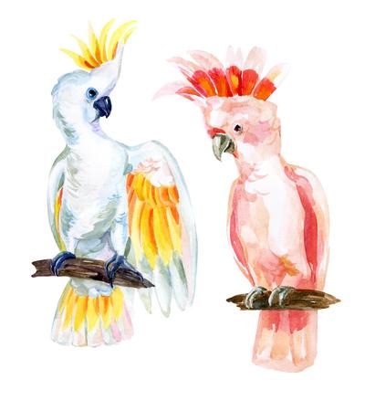 Waterverf Australische Cockatoo set, handgeschilderde illustratie van papegaaien