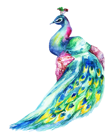 Watercolor hand painted peacock Stock Photo