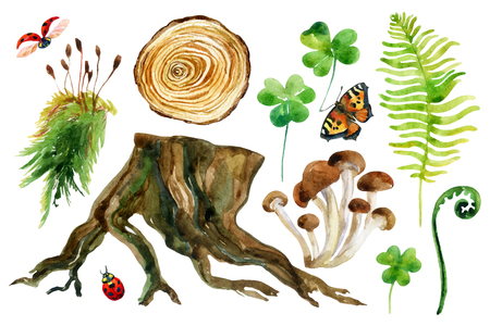 undergrowth: Forest watercolor set isolated on white background. Woods stump, mushroom, leaves, moss, lady bug and butterfly. Watercolor colorful natural woods life. Hand painted forest wildlife illustration