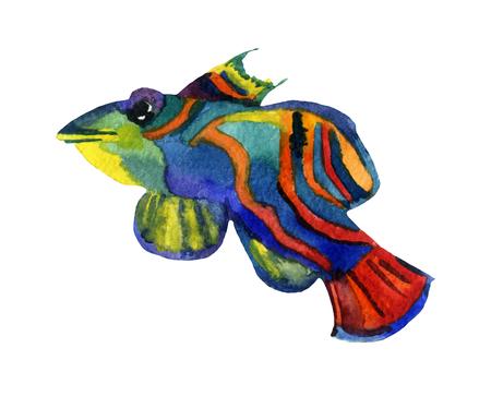 gill: Mandarin fish - raster watercolor illustration Stock Photo