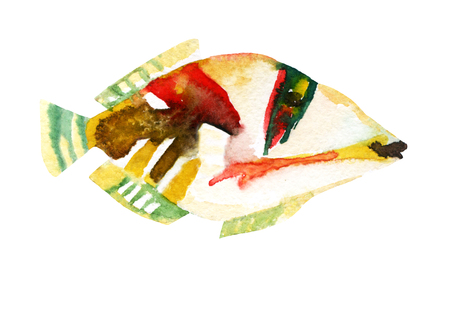 Exotic fish - tropical Picasso triggerfish. Watercolor raster illustration