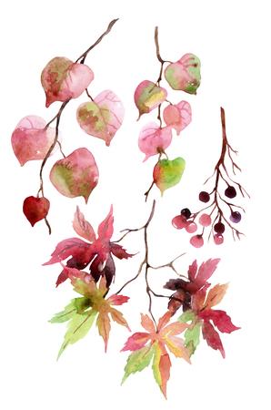 Acuarela hojas de otoño, ramas y bayas. Conjunto de ramas de tilo, arce japonés y bayas aisladas sobre fondo blanco. Ilustración de elementos de jardín de otoño pintados a mano Foto de archivo - 77580137