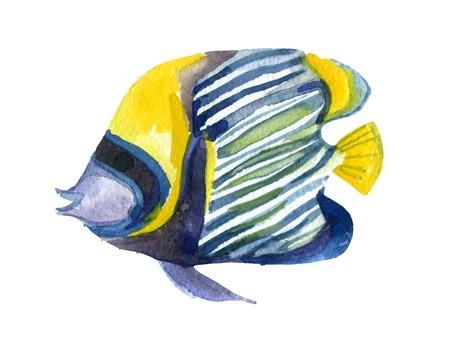 fish tail: Angelfish fish. Watercolor raster illustration Stock Photo