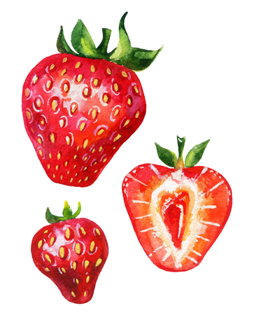 Strawberry set. Hand drawn illustration of berries isolated on white background