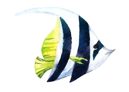 longfin: Exotic fish - tropical bannerfish. Watercolor raster illustration
