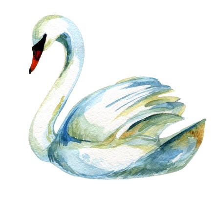 水彩の白鳥。手描きのイラスト 写真素材