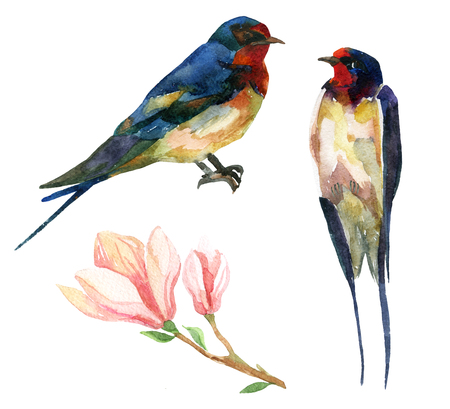 Watercolor set of Swallows with magnolia. Hand painted illustration