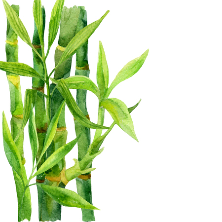 Bamboo watercolor background. Hand painted illustration in asian style.