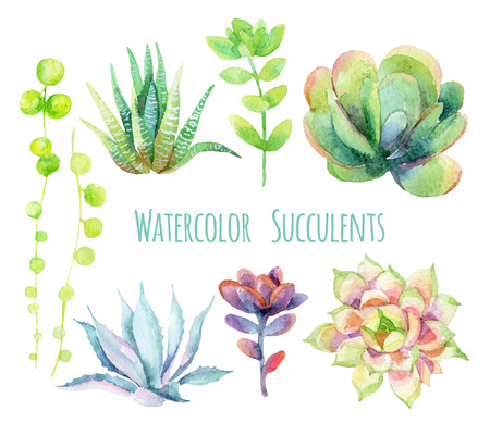 Watercolor succulents set. Hand painted raster illustration