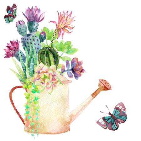 Watercolor succulents, watering can and butterflies. Hand painted illustration Banque d'images