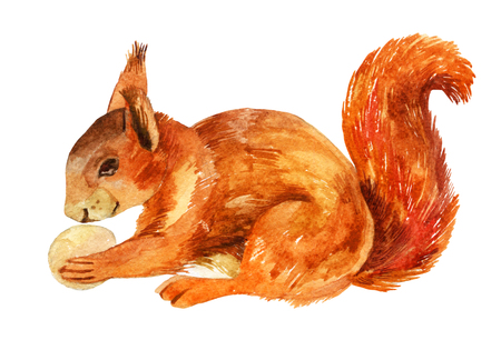 Watercolor sketch of a squirrel with a nut Stock Photo