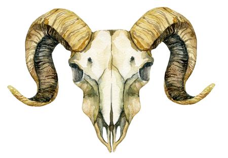 Ram の頭蓋骨。羊の頭蓋骨は、白い背景で隔離。手描きのイラスト