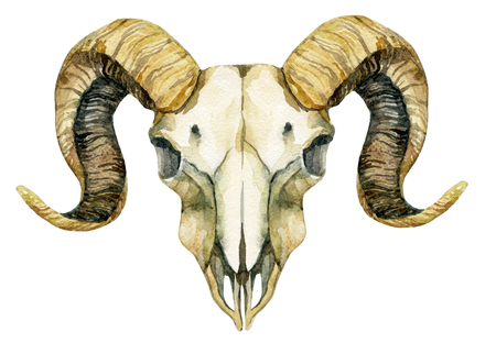 Ram 두개골. 양 두개골 흰색 배경에 고립입니다. 손으로 그린 그림 스톡 콘텐츠