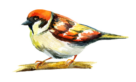 sparrow watercolor, raster illustration
