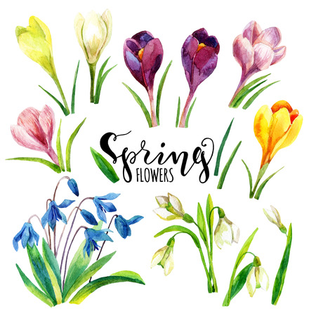 Watercolor spring flowers set. Hand painted snowdrop, crocus flowers isolated on white background