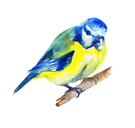 titmouse: Watercolor bird for your design. raster illustration