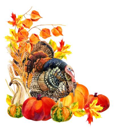 gamebird: Turkey bird with harvest. Thanksgiving card. Watercolor hand painted illustration Stock Photo