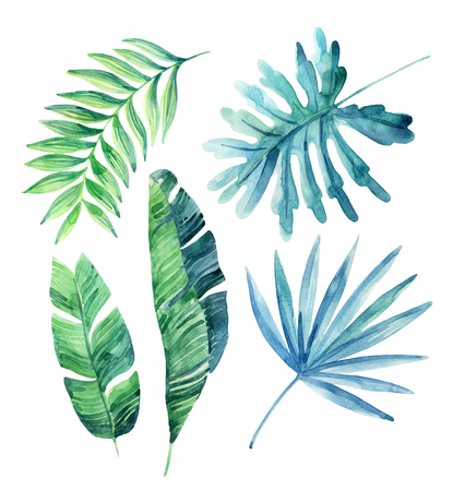 Watercolor tropical leaves set isolated on white background. Watercolor exotic leaves painting. Hand painted exotic leaves illustration for summer design.