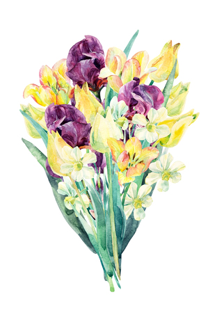 Watercolor flowers bouquet. Watercolor floral garden card with tulip, daffodil and iris. Painted flowers isolated on white background. Floral illustration for greetings, invitations, wedding design