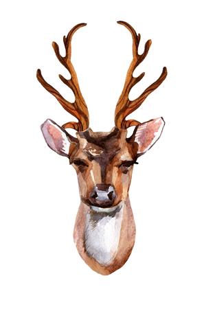 수채화 사슴 머리 - 전면 뷰입니다. 손으로 그린 그림