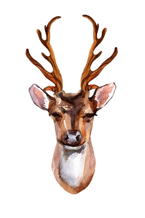 ruminant: Watercolor deer head - front view. Hand painted illustration