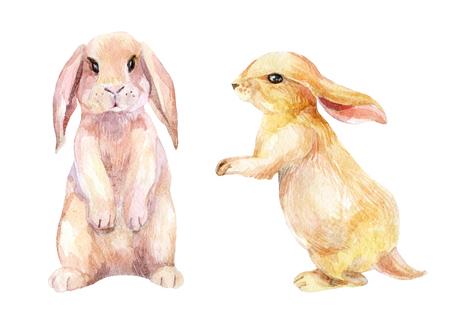 Watercolor rabbit. Cute bunny set. Hand painted illustration