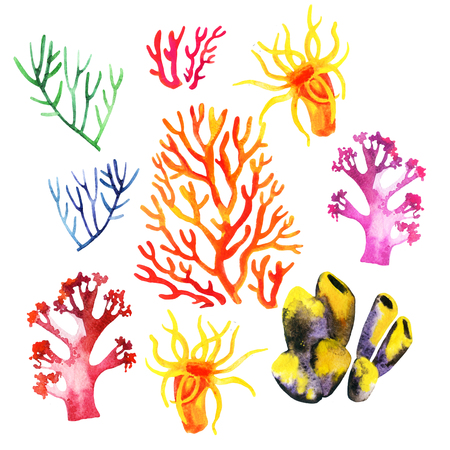 Illustration of the watercolor coral reefs on a white background Banque d'images