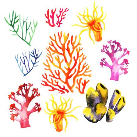 Illustrazione delle barriere coralline di acquerello su uno sfondo bianco Archivio Fotografico - 81562762