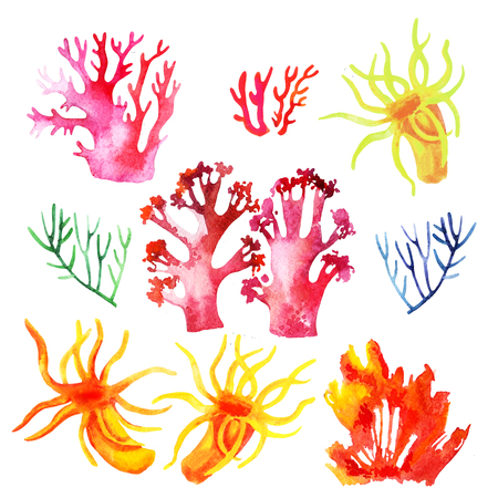 Illustration of the watercolor coral reefs on a white background Stock Photo
