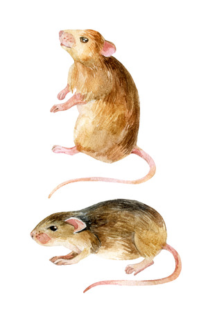 Mouse set. Two watercolor mice. Hand painted illustration isolated on white background