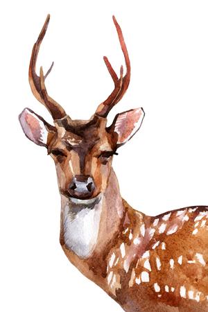 Watercolor deer head - front view Imagens