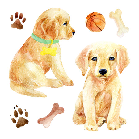 Labrador retriever puppy set. Two puppies with toys. Hand painted dogs watercolor illustration, isolated on white backgroun