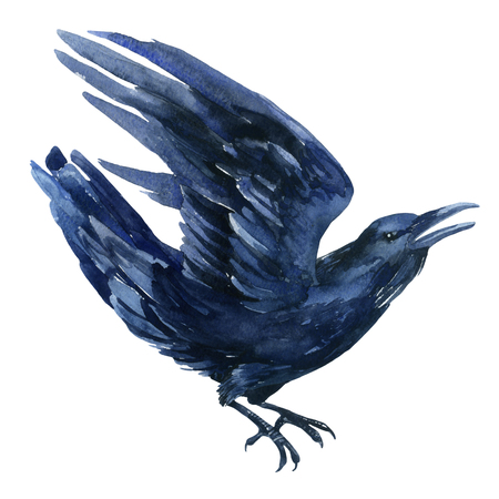 gazing: Raven watercolor illustration. Flying black raven isolated  on white background.