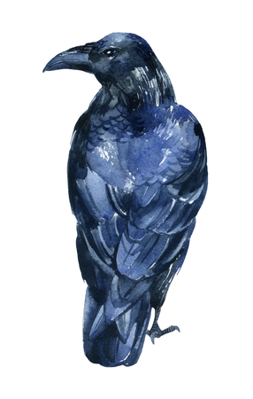 Raven watercolor illustration. Flying black raven isolated  on white background.