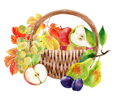 Fruits and berries in basket. Watercolor grapes, apples, pears and plums. Hand painted illustration isolated on white Stockfoto