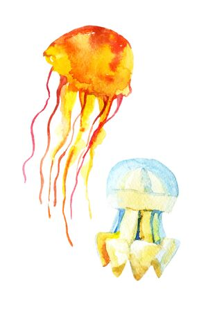 Colorful jellyfish set. Watercolor illustration