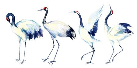 Aquarel Aziatische kraan vogel set. Handgeschilderde traditionele illustratie Stockfoto