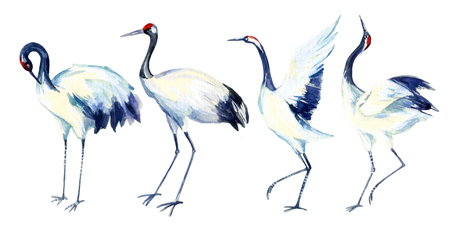 Watercolor asian crane bird set. Hand painted traditional illustration